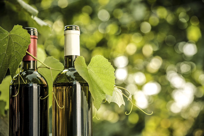 vini-biologici